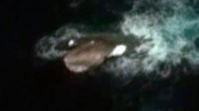 Off The Coast Of Antarctica In Pictures Google Maps Imprinted Pop Up Monster Gigantic Proportions Only Its Upper Part Seemed To Be Out Water