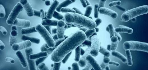 bakteriya-650x368