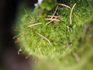 mosses and lichens on tree