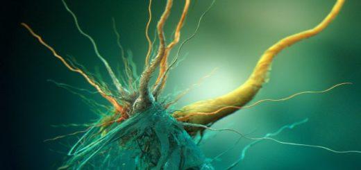 bacteria-650x366
