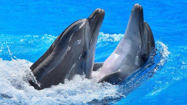 1478190387_1402267815-oboi-1920h1080-veselye-delfiny-12