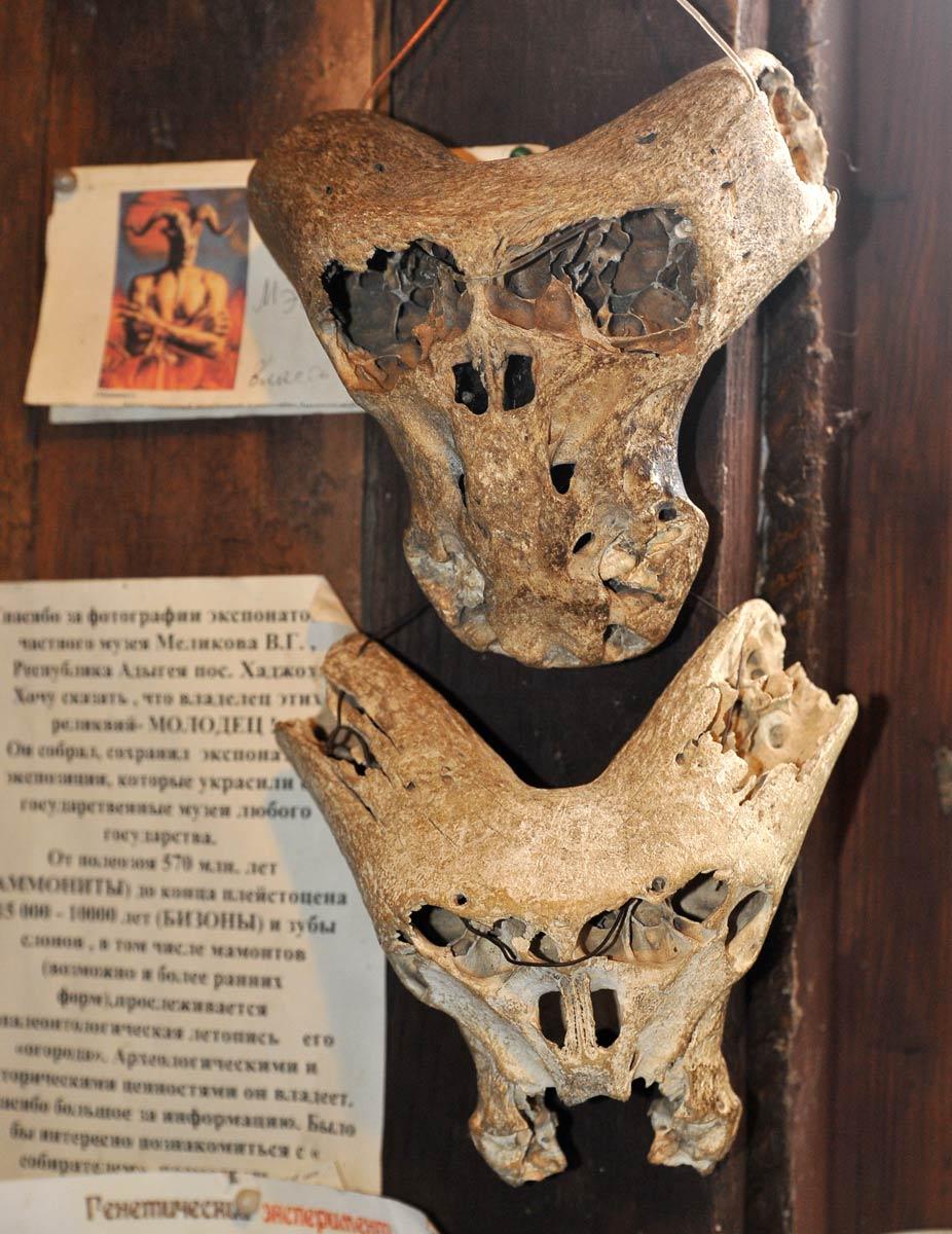 ahnenerbe skulls