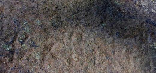 redchajshaya-naxodka-v-toskane1