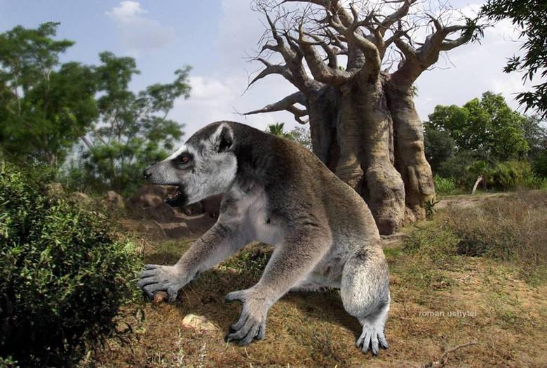 Giant animals that lived on Madagascar | Earth Chronicles News