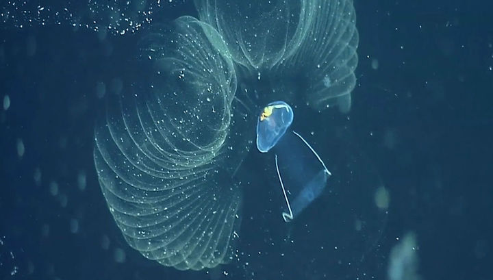 Mysterious creatures recycle plastic polluting ocean   Earth