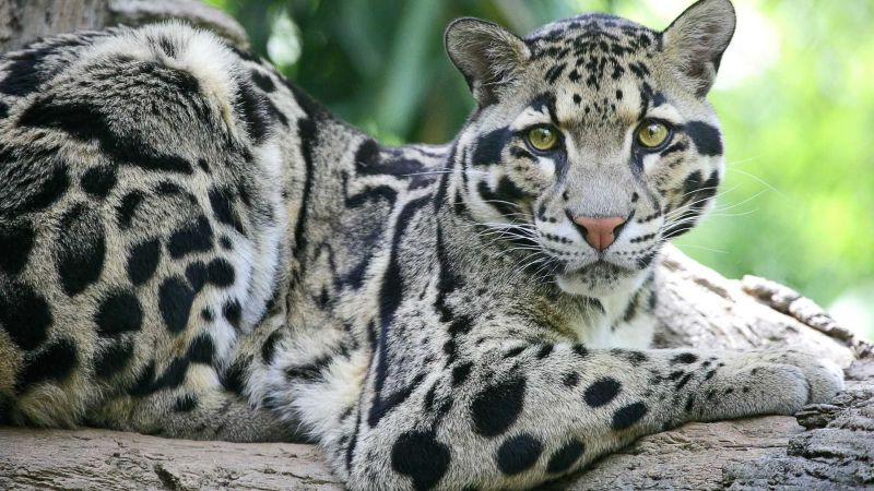 10 animals that have died out in the last 10 years earth