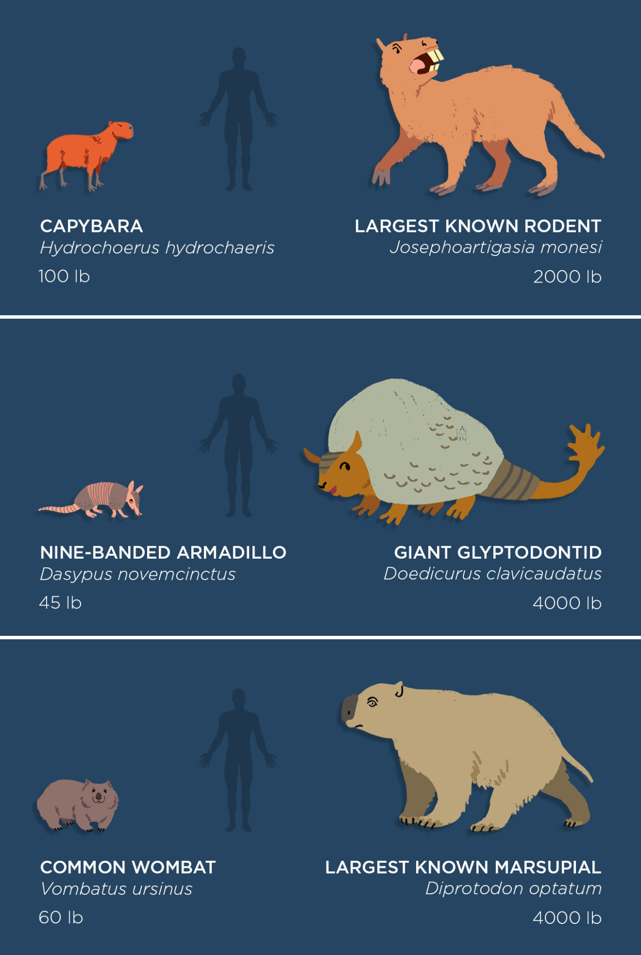 Image of: Vector Image Extinct Animals In Comparison With Modern Earth Chronicles Extinct Animals In Comparison With Modern Earth Chronicles News